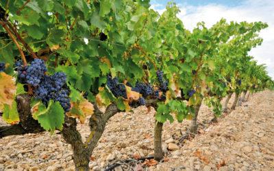 Les solutions viticoles de conditionnement